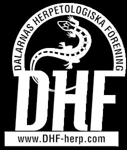 DHFloggan-011